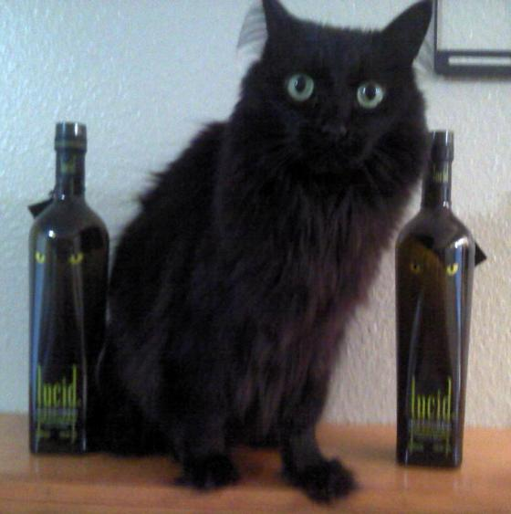 Lucid Absinthe and Skootz the Cat