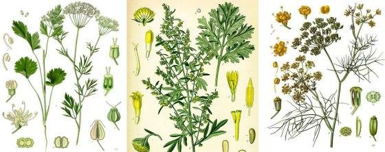 absinthe-ingredients