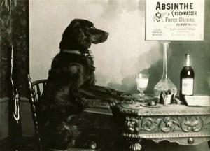 absinthe dog