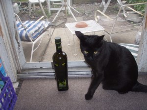 Jack - Lucid Absinthe and cat